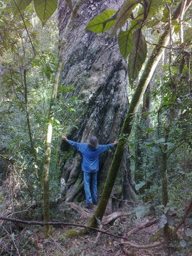 And the tree was bigger than me!