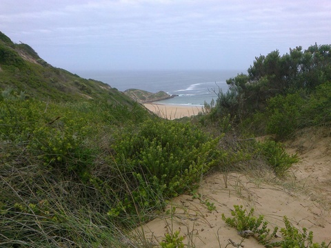 Dunes. Fynbos. Sea.  At Robberg Nature Reserve